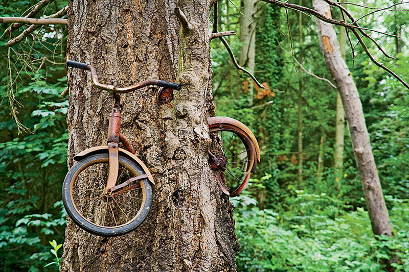 A bike trapped in a tree